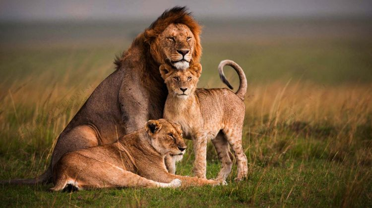 Interesting facts about Maasai Mara National Reserve